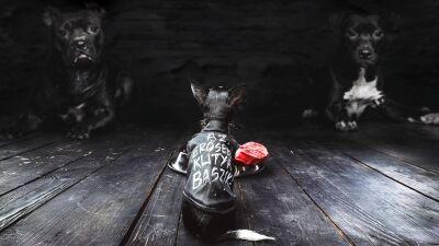 Dizájnos szerkók kutyáknak – Ebura-interjú