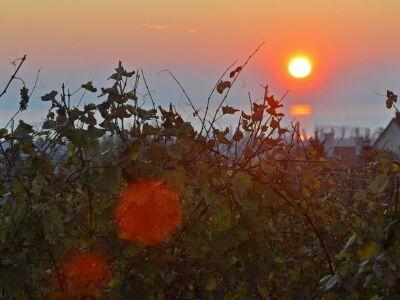 Ősz Paloznakon - Gasztro programok, kóstolók, DJ a szőlőben