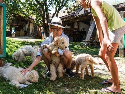 Kutyabarátság a Művészetek Völgyében
