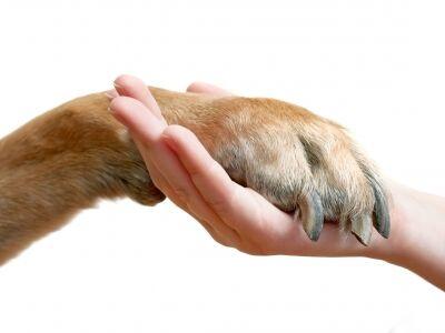 A kutya hatása a gyermekre, és a gazdájára