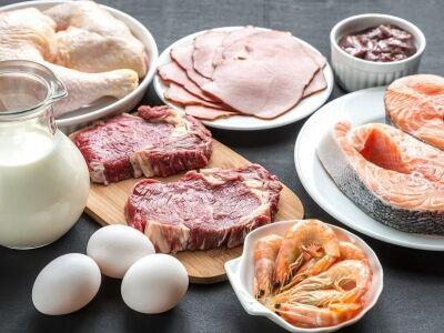 A fehérje szerepe az étkezésben