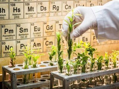 Csípős anyagok és szerves savak a gyógynövényekben