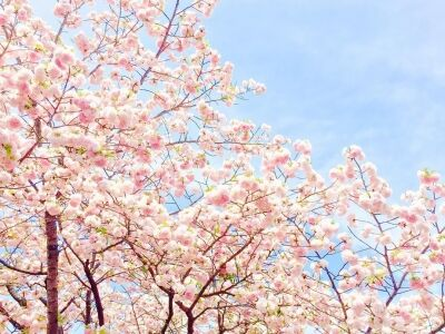 Élményfestés a Cseresznyefák árnyékában