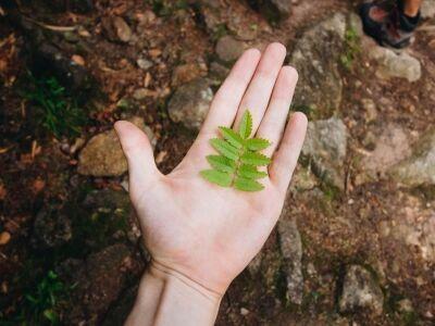 Életszerű környezetvédelem