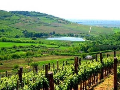 Kitűnő az idei bor Tokaj-Hegyalján