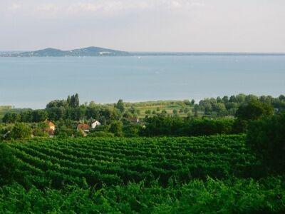 Arborétum és borászat egy helyen