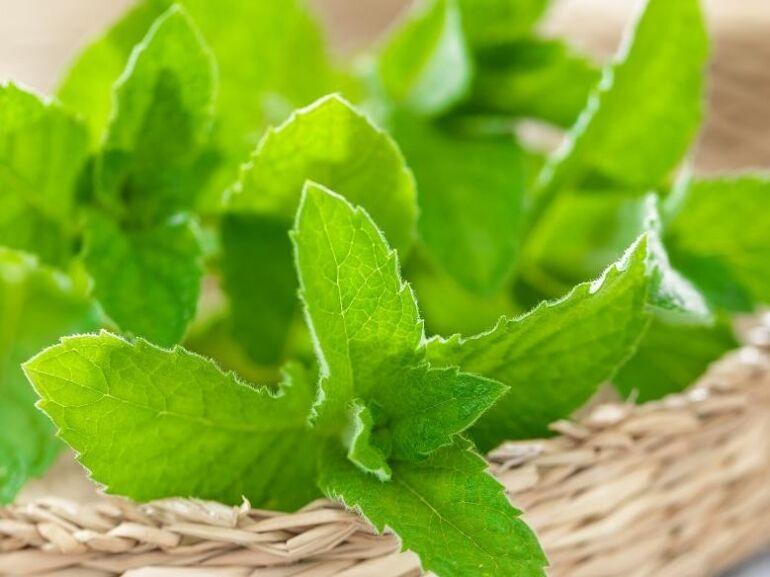 Hűsítő hatású gyógynövények