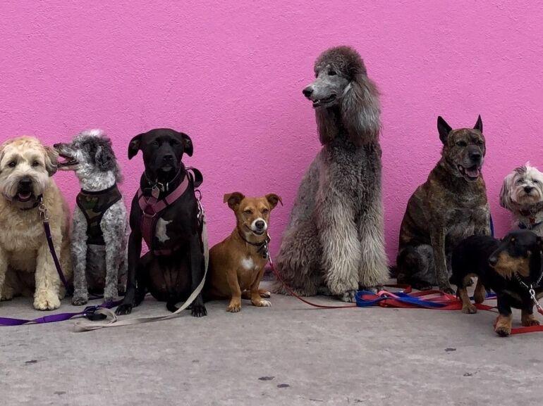 A kutyák világnapja