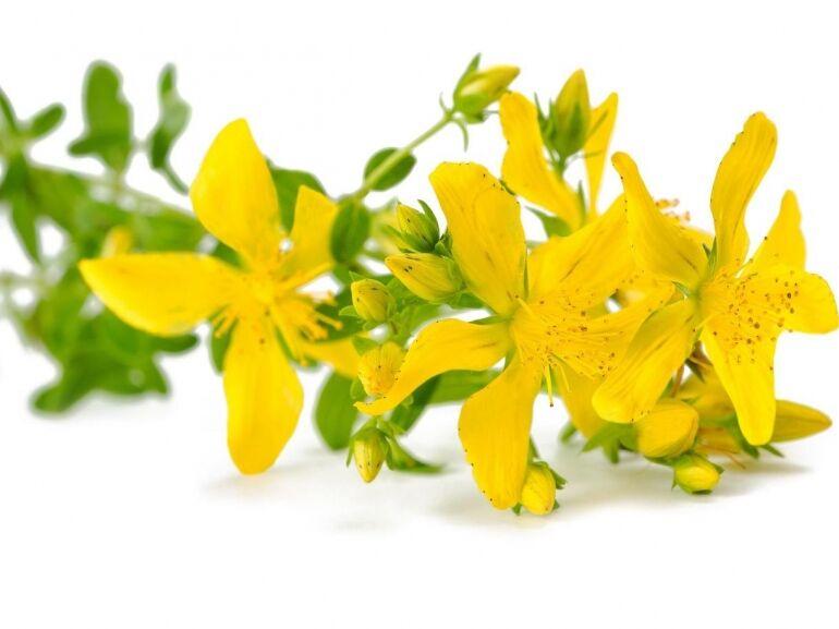 A legjobb gyógynövények lelki bajokra