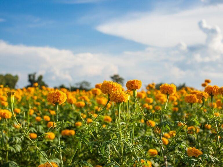 A legjobb gyógynövények candida ellen