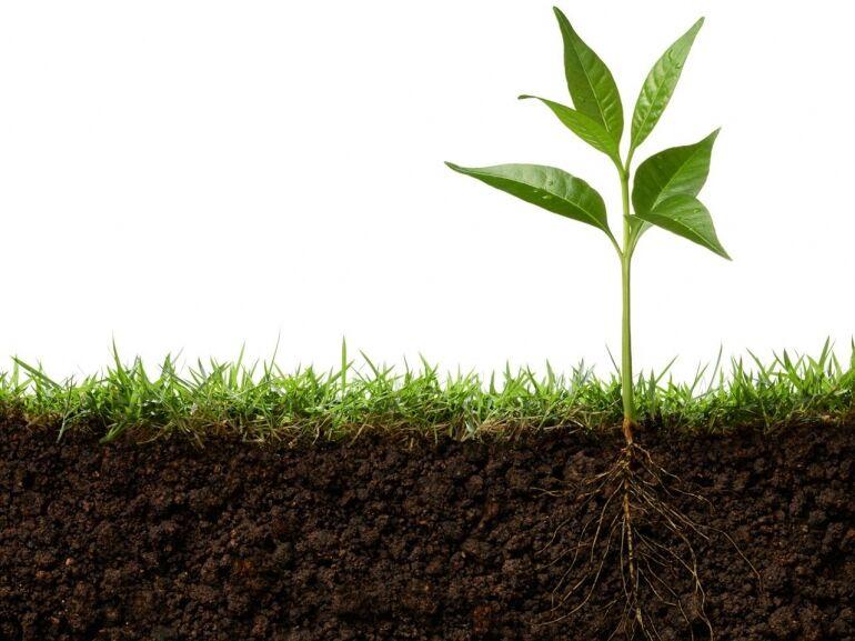 A talaj világnapja