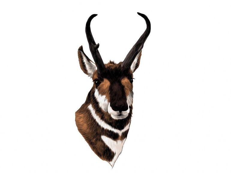 Afrikai asztrológia – Antilop