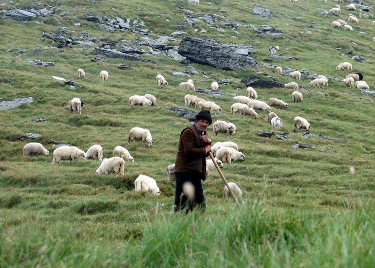 Pásztornap a Fonóban